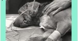 """""""Emprendió su camino al cielo"""": Muere 'Miky', el perro al que le sacaron los ojos en Puebla"""